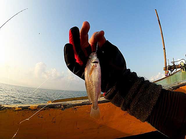 グチ タイランド 釣り